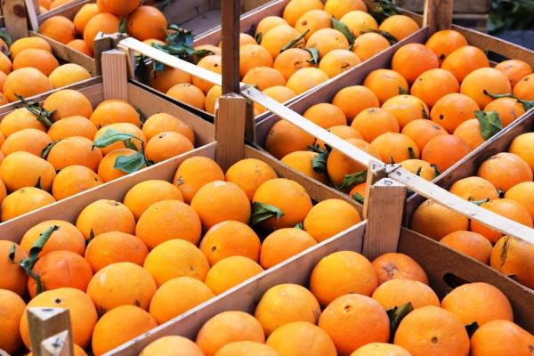 arance agromafia