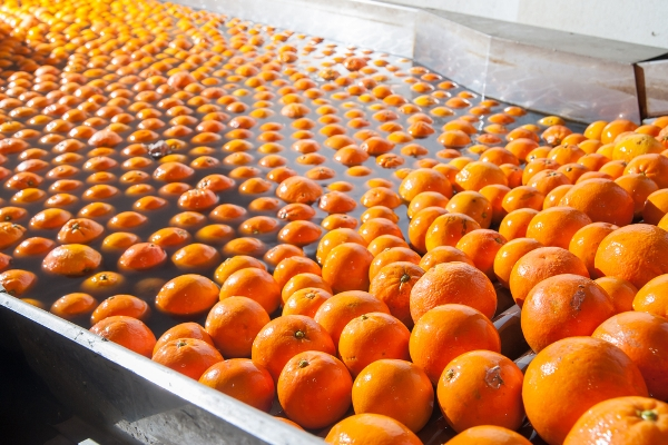 filiera arance