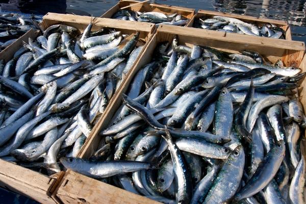 gruppi acquisto solidale pesce