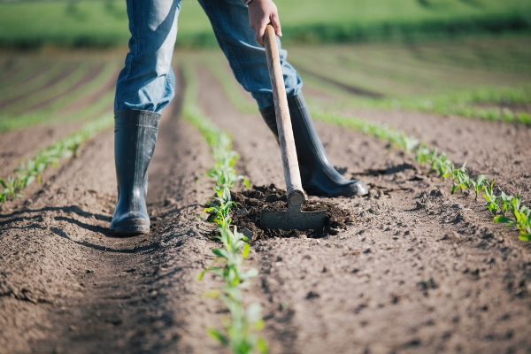 legge agricoltura