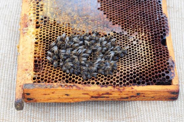 miele glifosato
