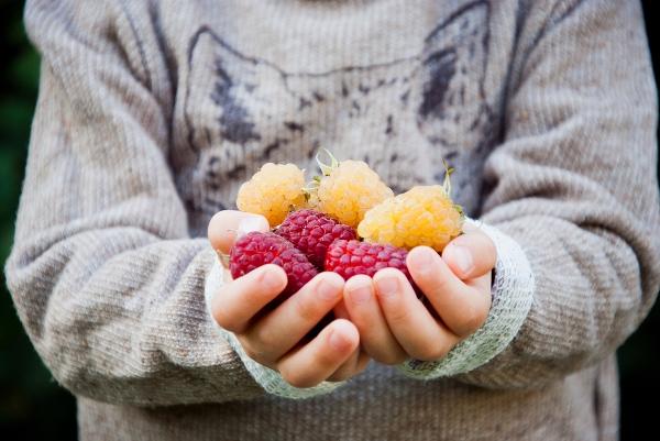 frutta bimbi