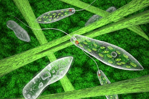 cellula piante