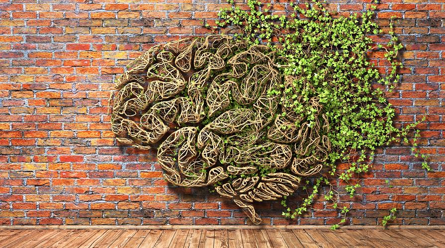 intelligenza delle piante
