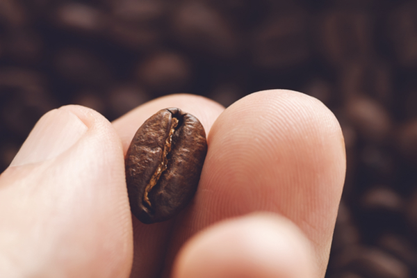 chicco caffè
