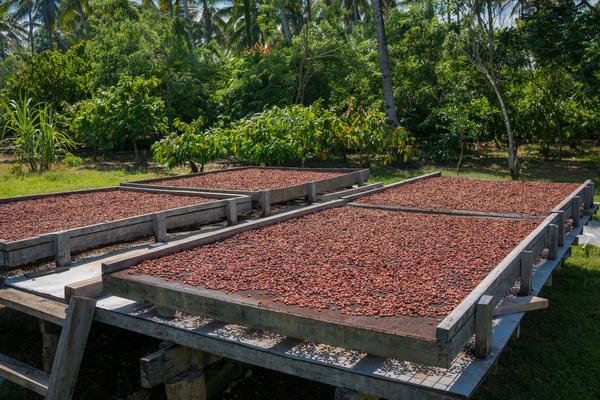 produzione cioccolato
