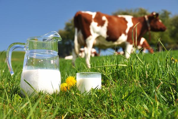 latte di mucca