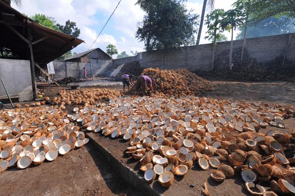 cocco produzione