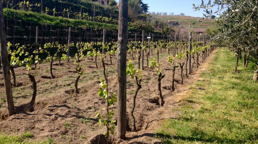 Campania Stories 2017