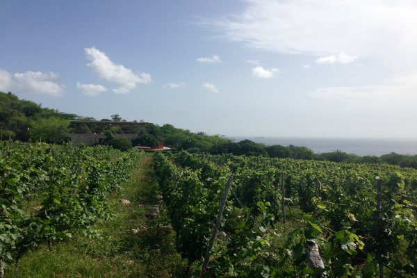 vino caraibi