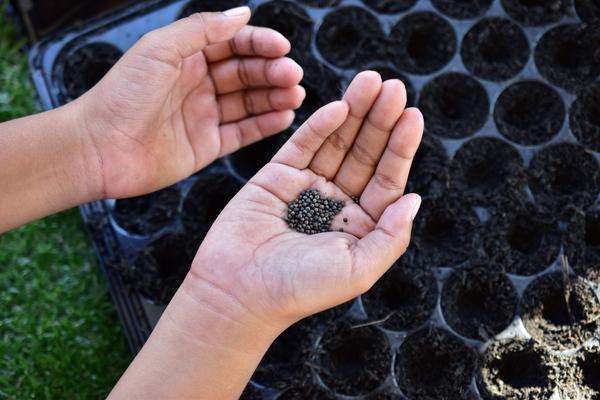 scambio di sementi