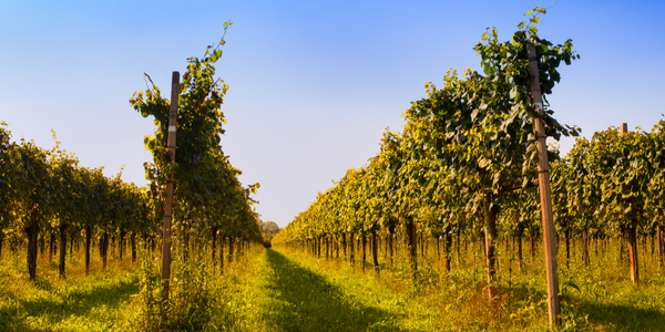 Vino Friuli