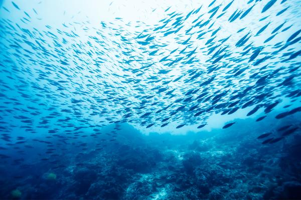 Consumo di pesce sostenibile