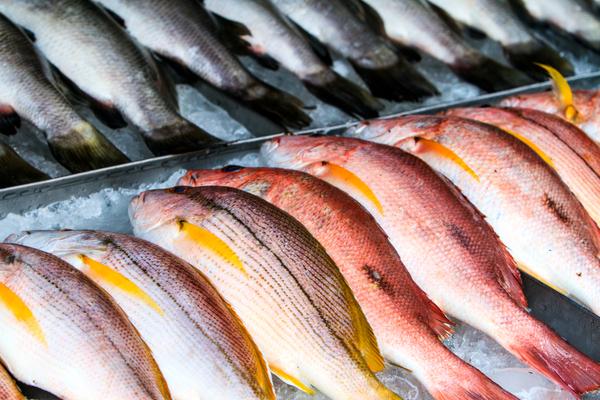 Scegliere il pesce
