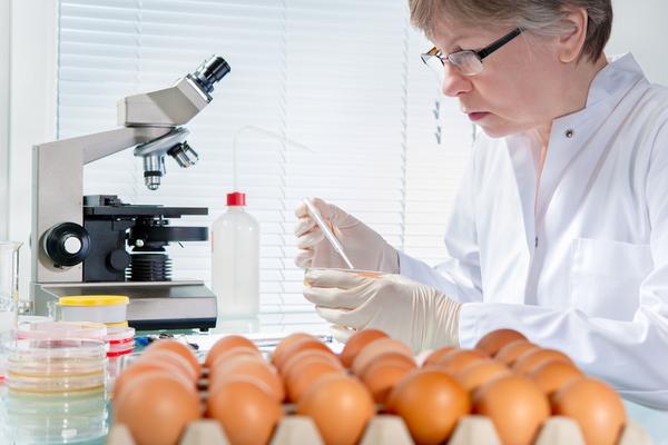 uova contaminate insetticida