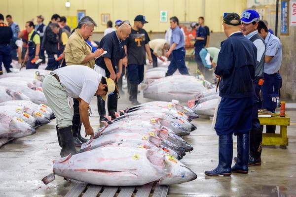 pesca tonno giappone