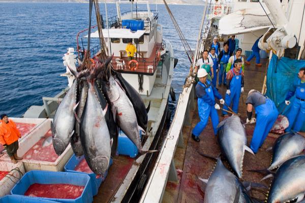 pesca tonno