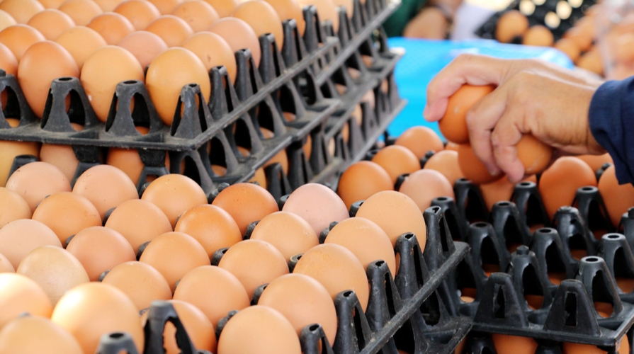 uova contaminate al fipronil