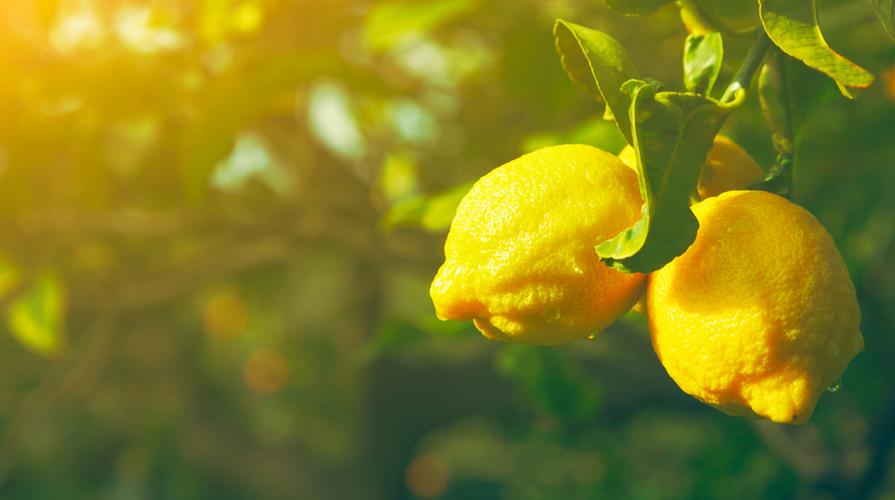 limoni italiani