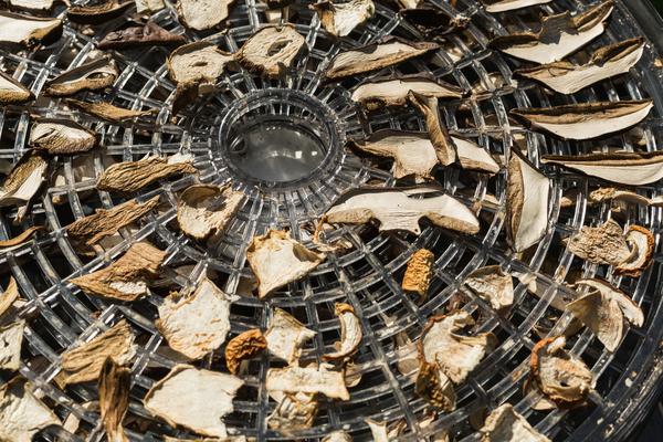 funghi essiccatore