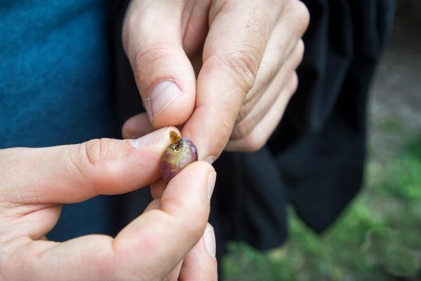 olive liguri mosca