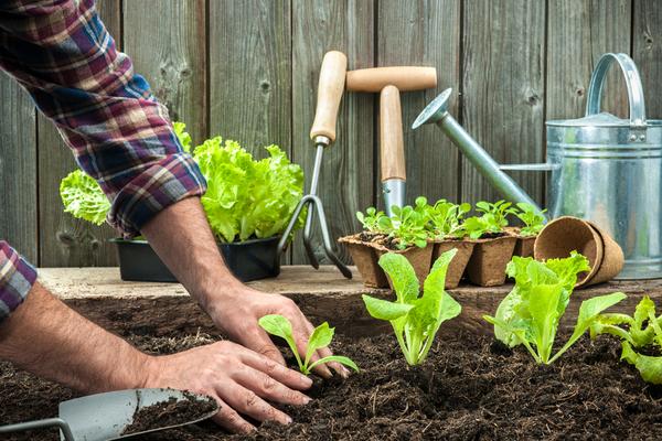 agricoltore orto