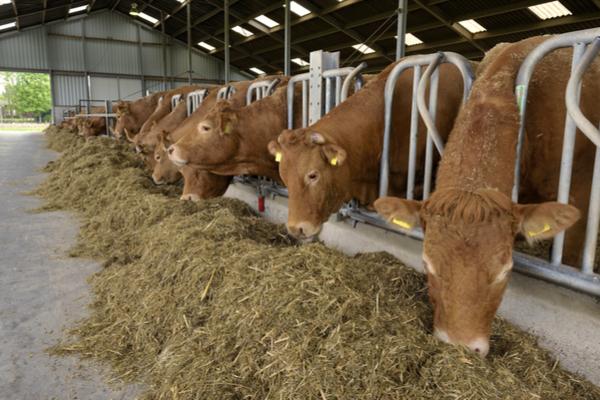 allevamento bestiame