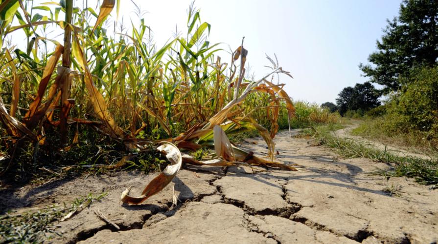 cambiamento climatico agricoltura e alimentazione