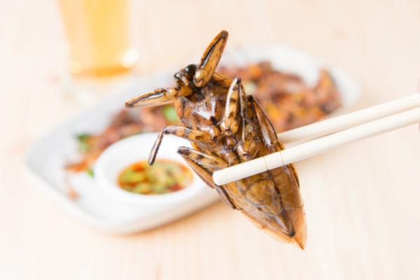 insetto bacchette