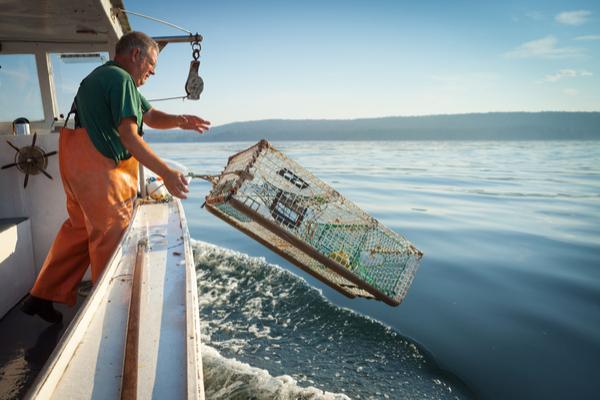 pesca aragoste