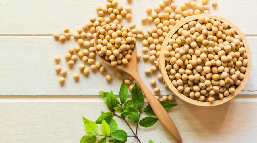 soia fermentata
