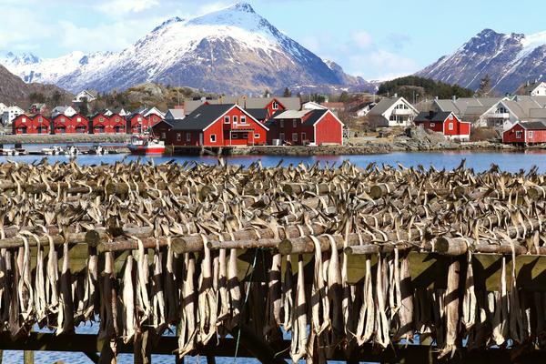 stoccafisso norvegia