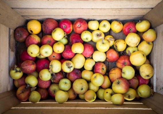 mele varietà antiche