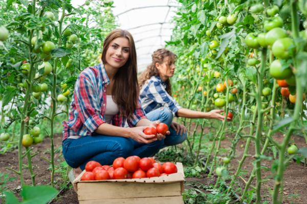 giovani finanziamenti agricoltura