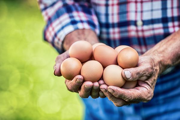 vendita diretta uova