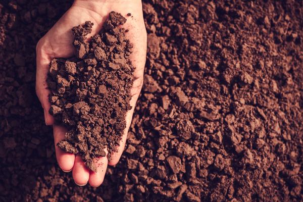 agricoltura giovani italia