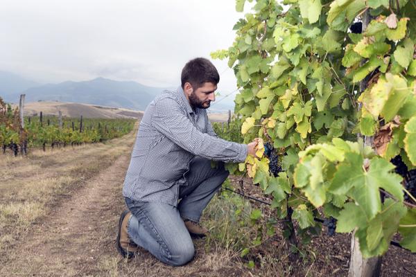 giovani agricoltura