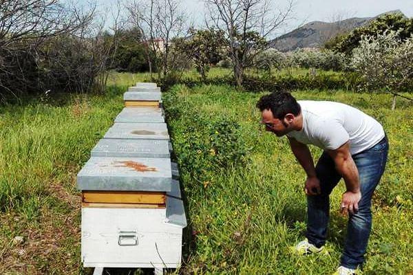 azienda meli ape nera