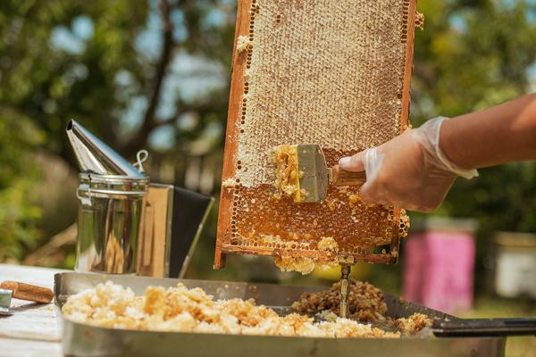 miele di ape nera sicula