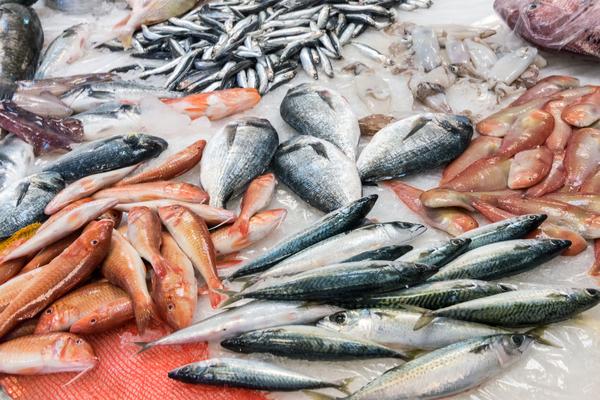 crisi della pesca