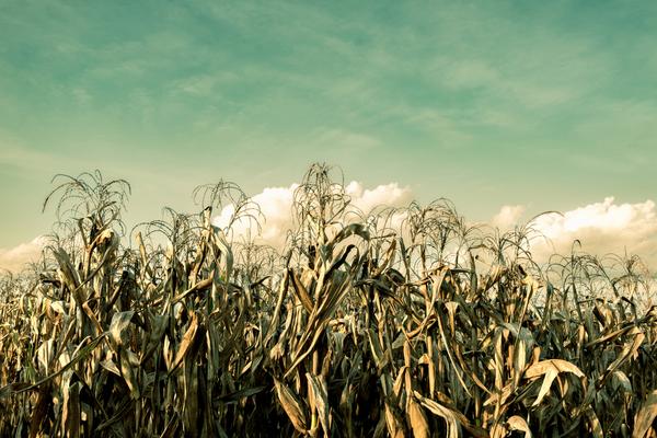 crisi alimentare mondiale
