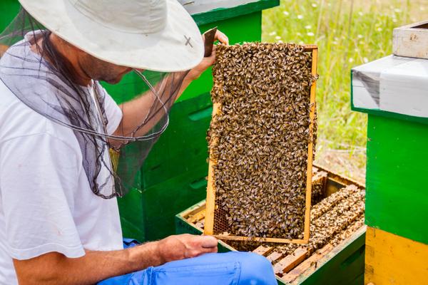 aziende apicoltura