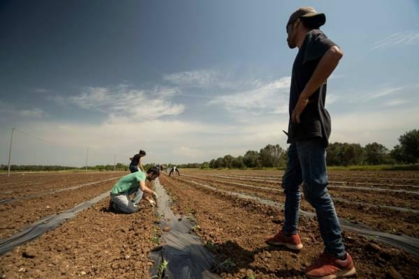 contadini liberi sfrutta zero
