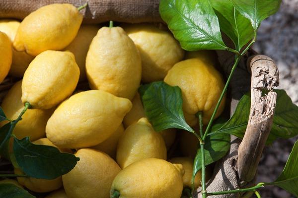 limoni sorrento