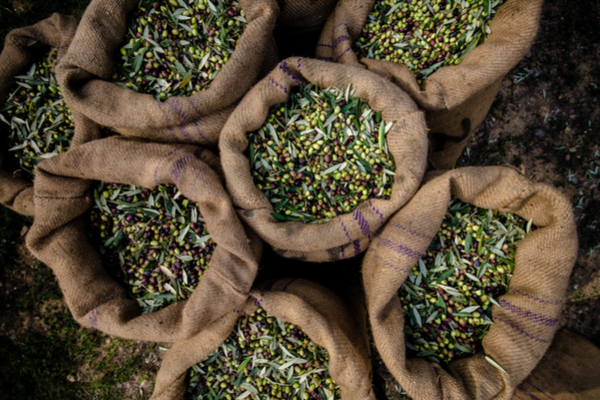 olive produzione