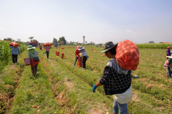 sfruttamento campi