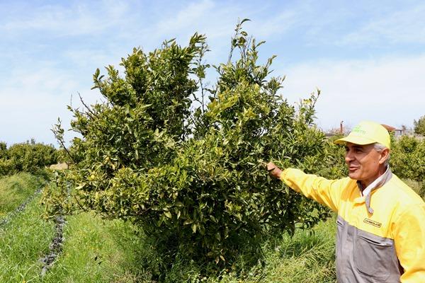 frutteti opera terrae