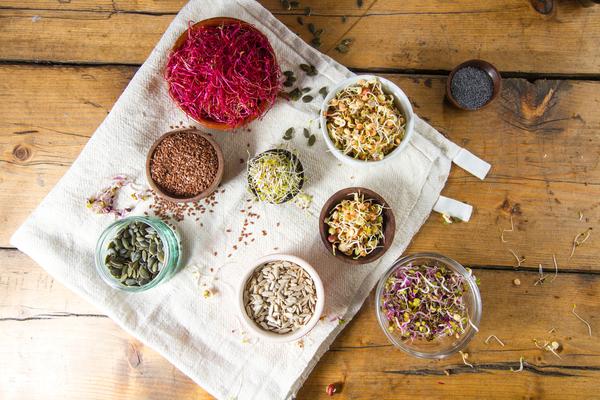 germogli e semi