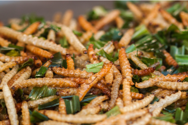 larve insetti novel food