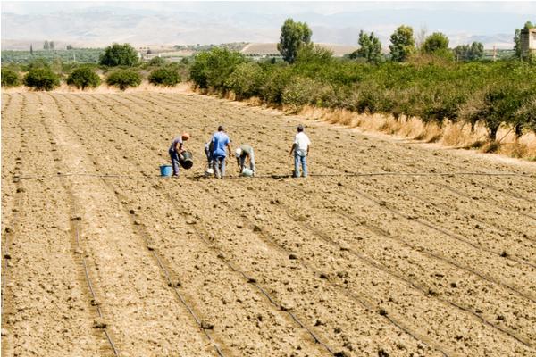 lavoratori illegali agricoli
